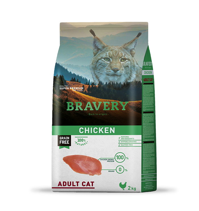 bravery_cat__chicken