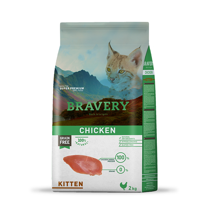 bravery_cat__kitten_chicken